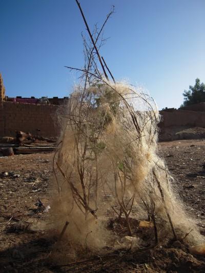 Ségou Koro, Mali